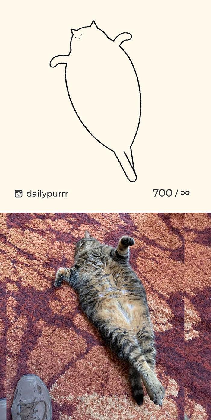 Aqui estão meus 40 novos desenhos de gatos bobos para fazer você rir 33