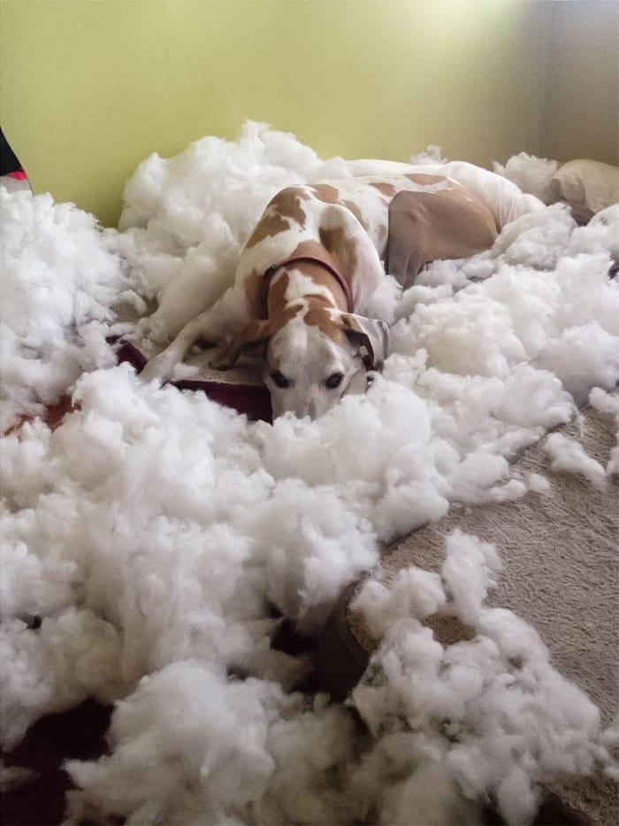 38 vezes que animais de estimação foram pegos destruindo algo 21