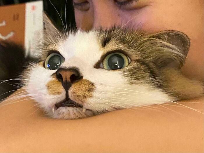 38 vezes que gatos disse um Não para o abraço 8