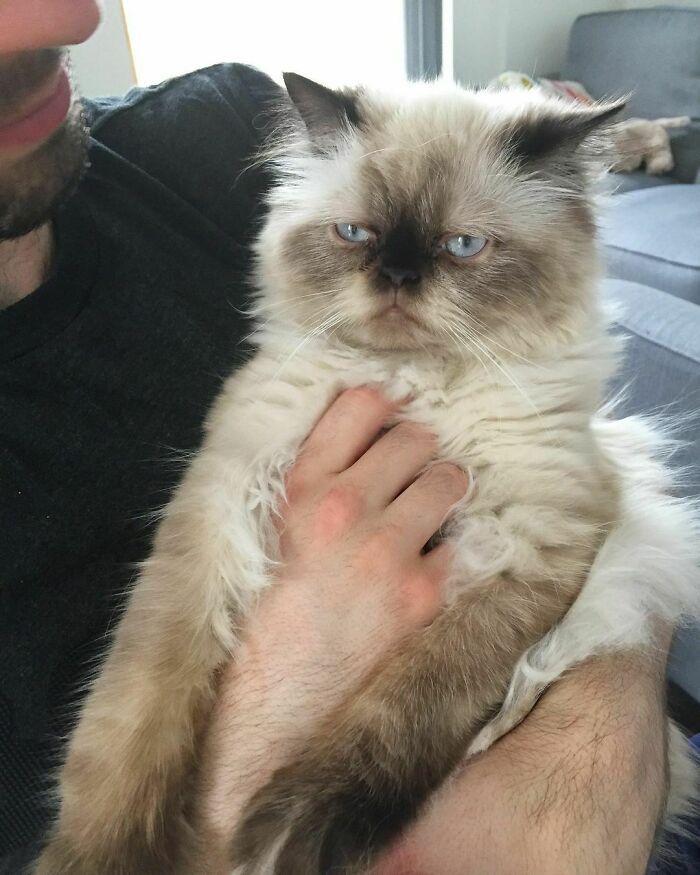 38 vezes que gatos disse um Não para o abraço 9