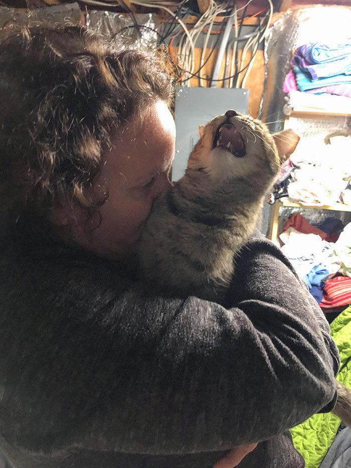 38 vezes que gatos disse um Não para o abraço 26