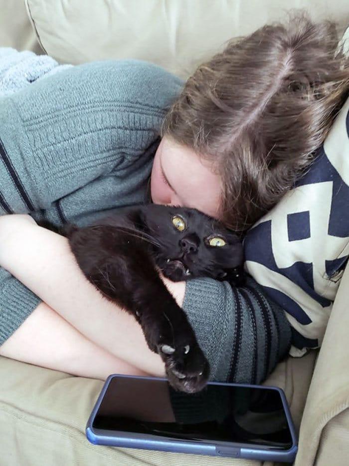38 vezes que gatos disse um Não para o abraço 31