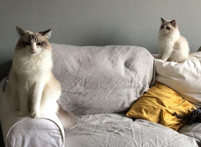 23 gatinhos sinceros que não esconder suas emoções 11