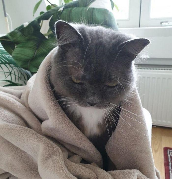 23 gatinhos sinceros que não esconder suas emoções 14