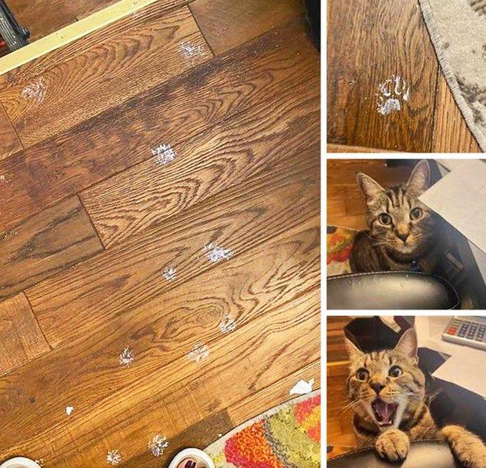 23 animais que fizeram coisas erradas, mas parecem tão fofos que é impossível ficar com raiva deles 6