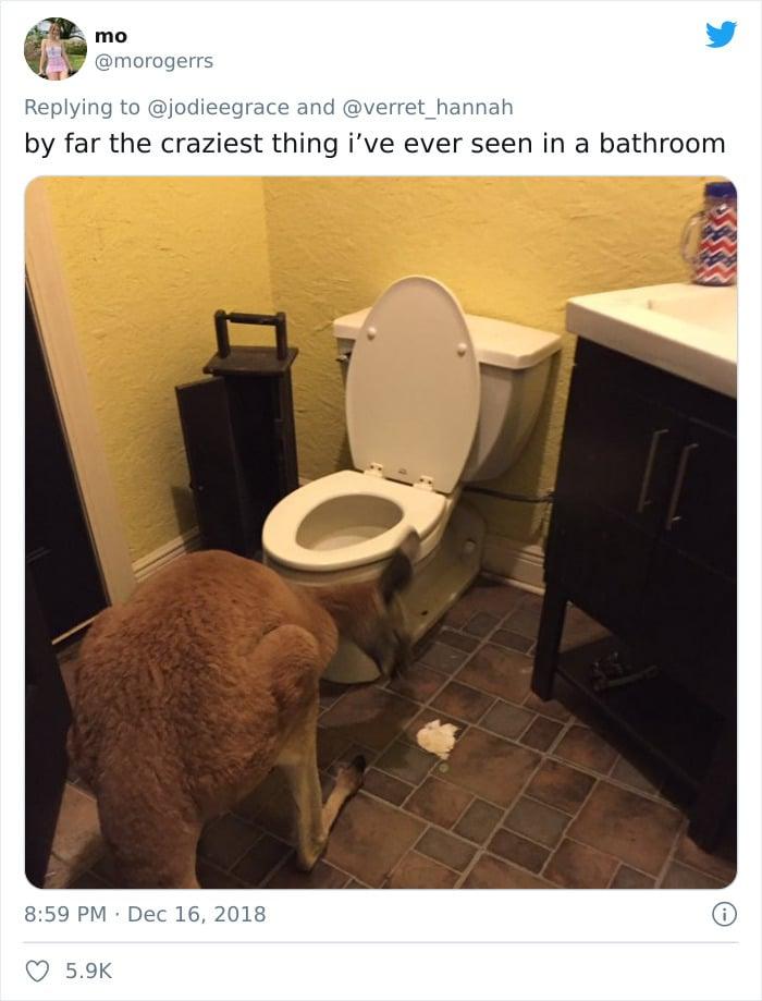 31 coisas estranhas nos banheiros dos rapazes 20