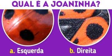 Quiz: Descubra o animal olhando apenas para algumas manchas 6
