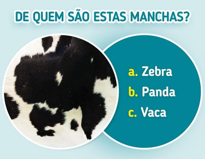 Quiz: Descubra o animal olhando apenas para algumas manchas 3