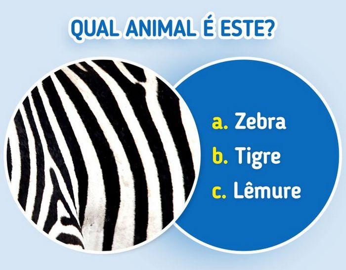 Quiz: Descubra o animal olhando apenas para algumas manchas 5