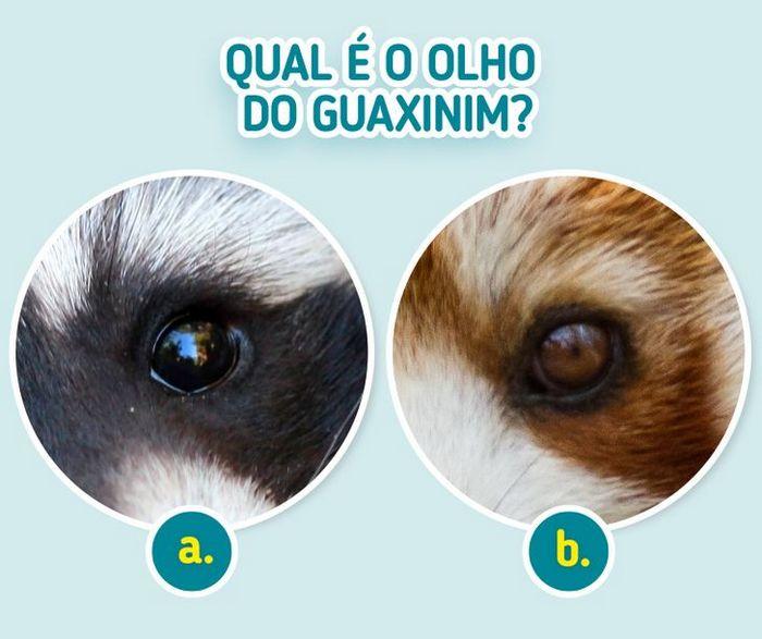 Quiz: Descubra o animal olhando apenas para algumas manchas 9
