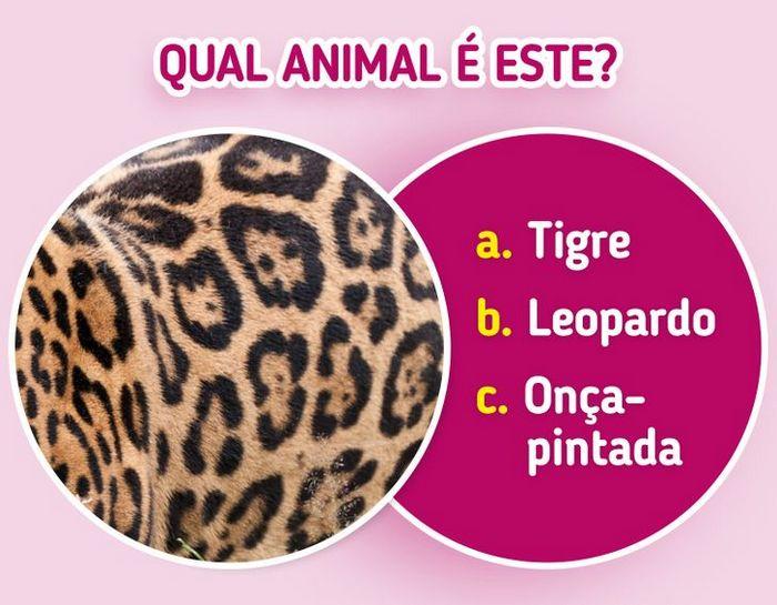 Quiz: Descubra o animal olhando apenas para algumas manchas 11