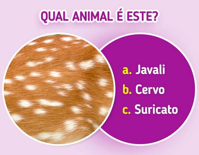Quiz: Descubra o animal olhando apenas para algumas manchas 15
