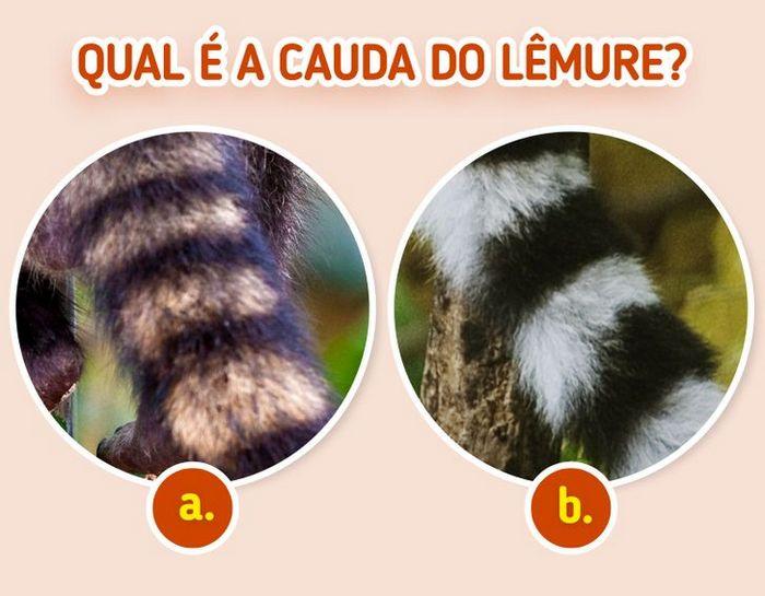 Quiz: Descubra o animal olhando apenas para algumas manchas 19