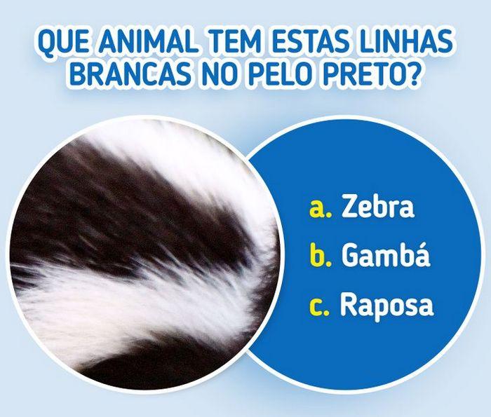 Quiz: Descubra o animal olhando apenas para algumas manchas 27