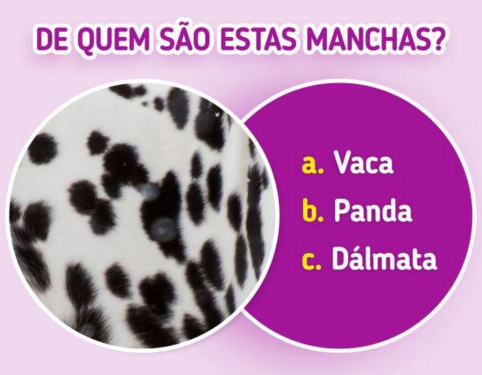 Quiz: Descubra o animal olhando apenas para algumas manchas 31