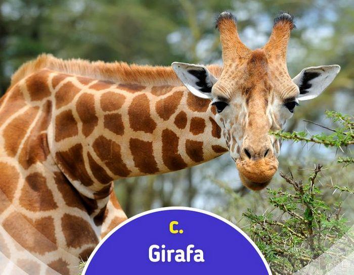 Quiz: Descubra o animal olhando apenas para algumas manchas 8
