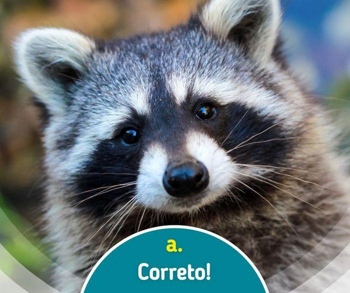 Quiz: Descubra o animal olhando apenas para algumas manchas 10