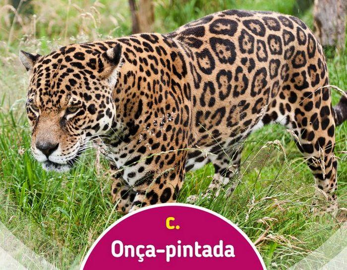 Quiz: Descubra o animal olhando apenas para algumas manchas 12