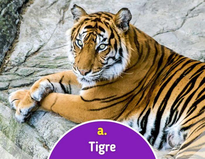 Quiz: Descubra o animal olhando apenas para algumas manchas 14