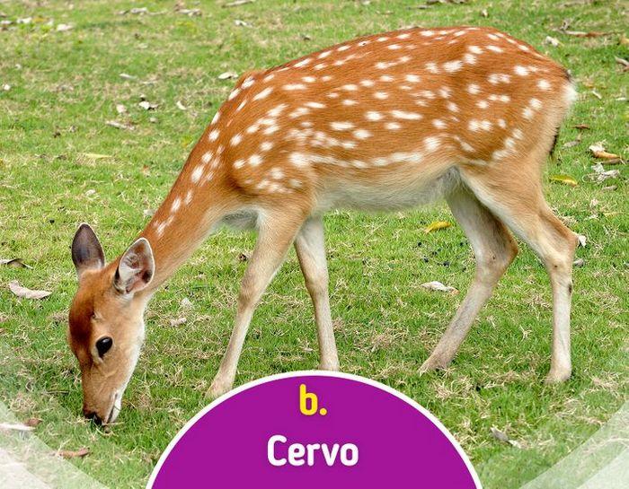 Quiz: Descubra o animal olhando apenas para algumas manchas 16