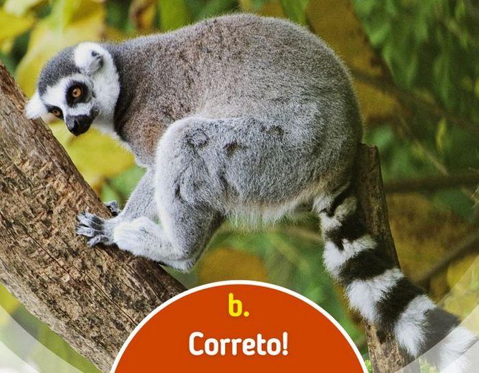 Quiz: Descubra o animal olhando apenas para algumas manchas 20