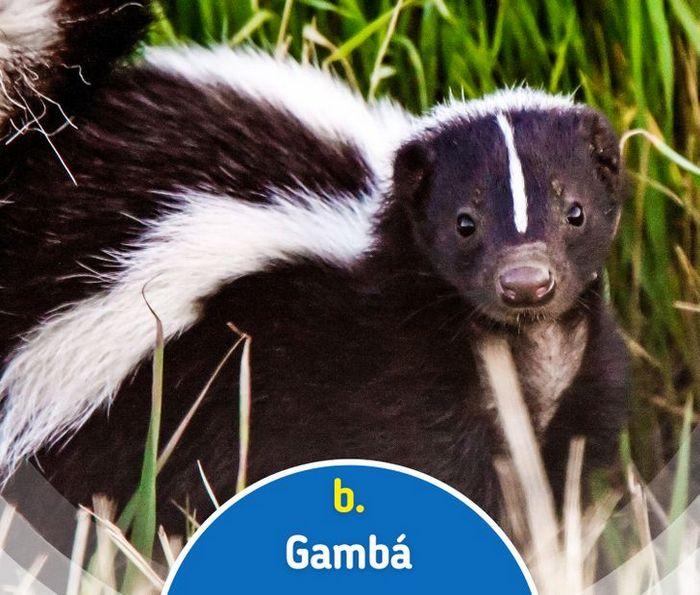 Quiz: Descubra o animal olhando apenas para algumas manchas 28