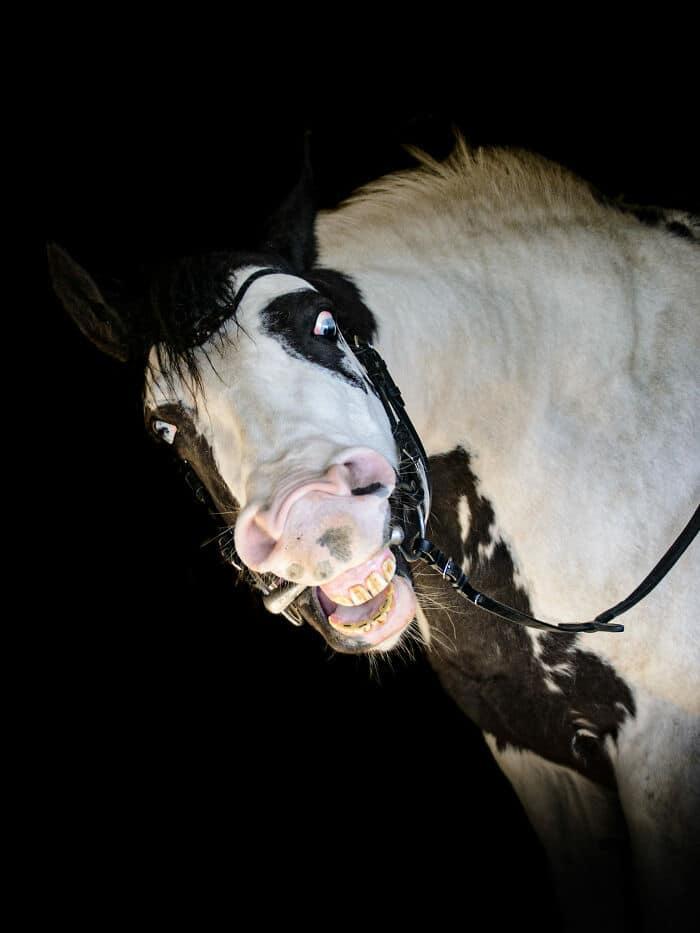 41 fotos de animais com auras poderosas e ameaçadoras 8