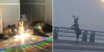 41 fotos de animais com auras poderosas e ameaçadoras 46