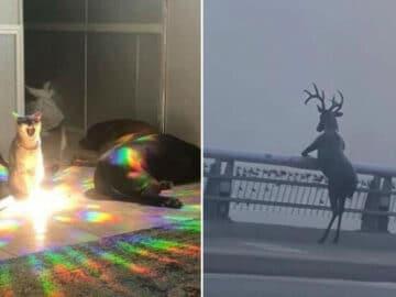 41 fotos de animais com auras poderosas e ameaçadoras 16