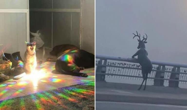 41 fotos de animais com auras poderosas e ameaçadoras 1
