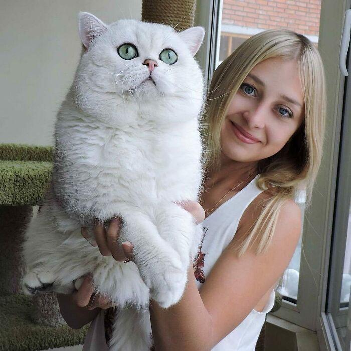 47 fotos de gatos grandes, mostrando como são gigantes 12