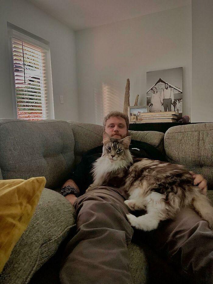 47 fotos de gatos grandes, mostrando como são gigantes 14