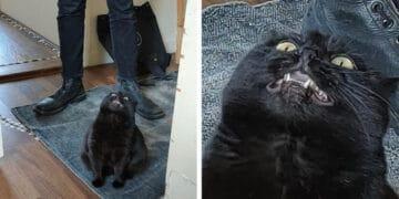23 gatinhos sinceros que não esconder suas emoções 13