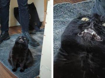 23 gatinhos sinceros que não esconder suas emoções 6