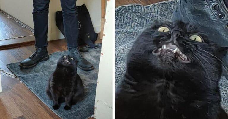 23 gatinhos sinceros que não esconder suas emoções 1