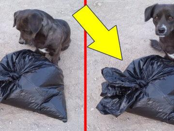 As 2 histórias de cachorros incríveis 12
