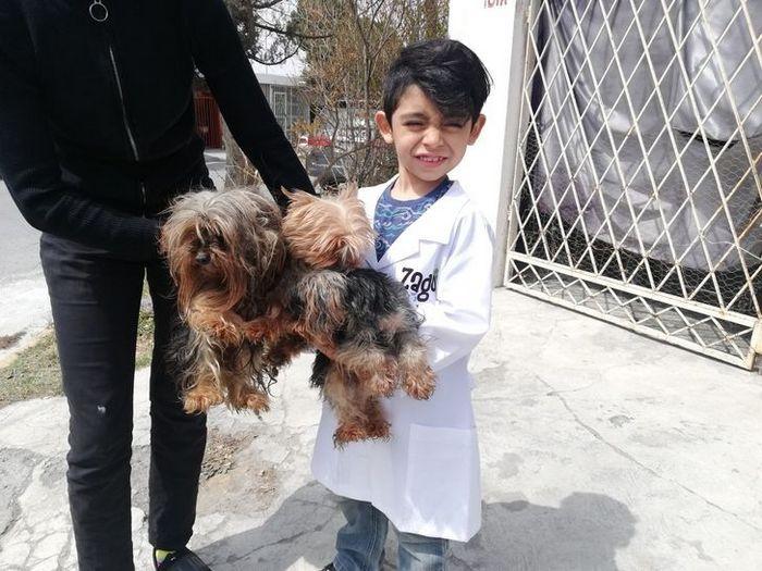 Menino de 7 anos abriu seu próprio negócio com o slogan Lavam-se cães com carinho 2