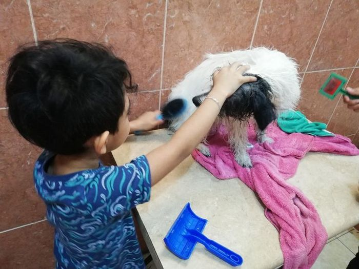 Menino de 7 anos abriu seu próprio negócio com o slogan Lavam-se cães com carinho 3