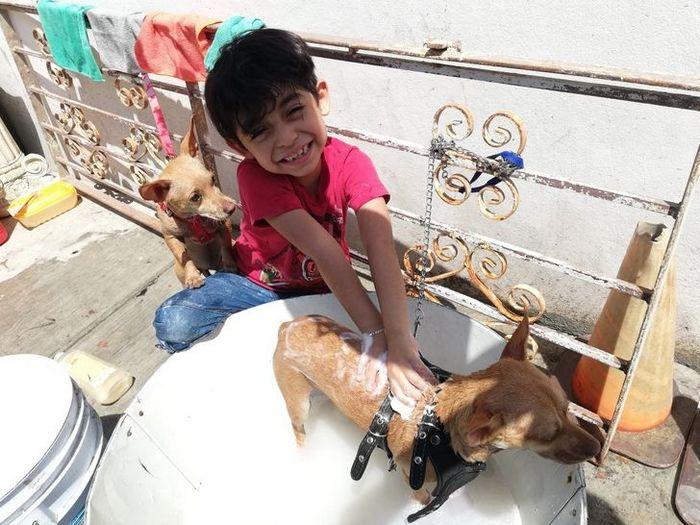 Menino de 7 anos abriu seu próprio negócio com o slogan Lavam-se cães com carinho 6