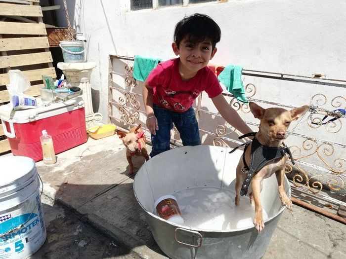 Menino de 7 anos abriu seu próprio negócio com o slogan Lavam-se cães com carinho 7