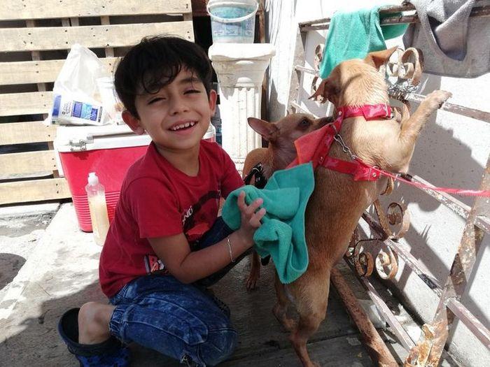 Menino de 7 anos abriu seu próprio negócio com o slogan Lavam-se cães com carinho 8