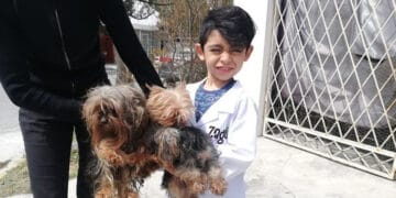 Menino de 7 anos abriu seu próprio negócio com o slogan Lavam-se cães com carinho 12