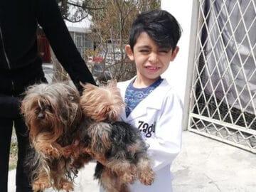 Menino de 7 anos abriu seu próprio negócio com o slogan Lavam-se cães com carinho 45