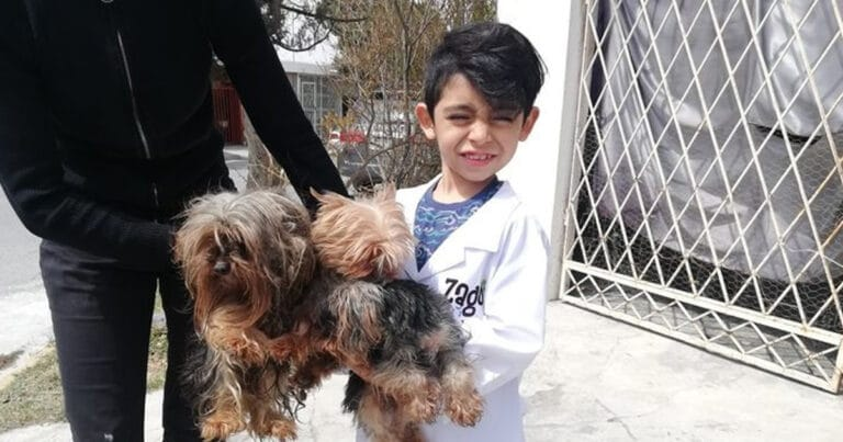 Menino de 7 anos abriu seu próprio negócio com o slogan Lavam-se cães com carinho 1