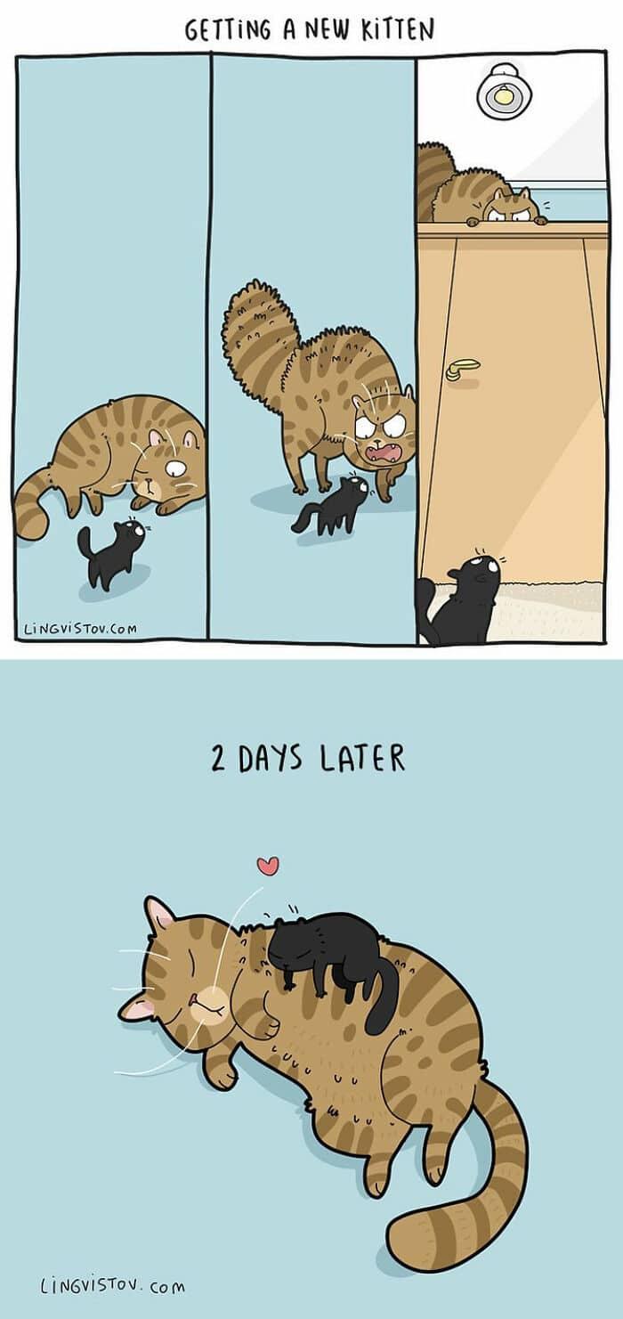 Artista ilustra momentos hilariantes na vida de cada proprietário de gato (35 fotos) 22