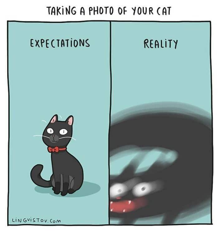 Artista ilustra momentos hilariantes na vida de cada proprietário de gato (35 fotos) 34