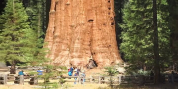 8 árvores incríveis que você não vai acreditar que existem 9