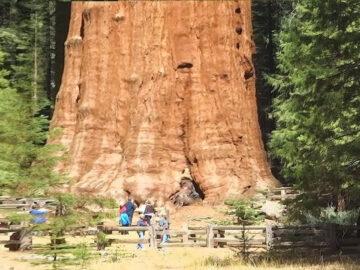 8 árvores incríveis que você não vai acreditar que existem 5