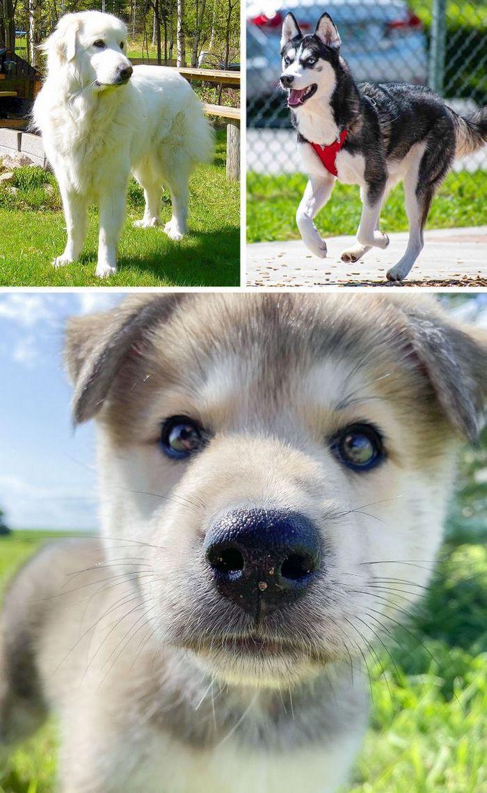 17 cachorros híbridos que dão um show de beleza e fofura 15