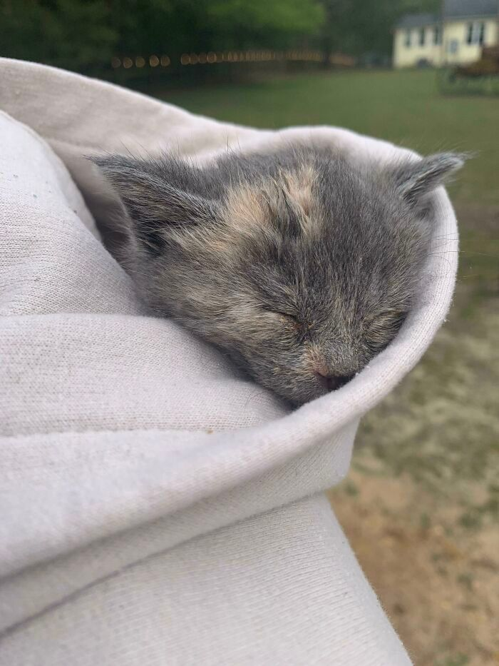 30 fotos de animais de estimação que foram adotados em maio 13